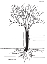 introductory forestry tree diagram free parts of plant templates
