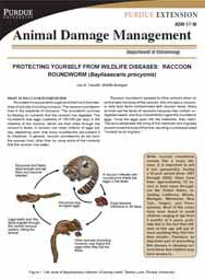 Protecting Yourself from Wildlife Diseases: Raccoon Roundworm (Baylisascaris procyonis)