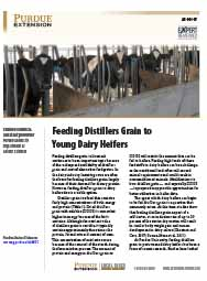 Feeding Distillers Grain to Young Dairy Heifers