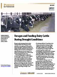 Forages and Feeding Dairy Cattle During Drought Conditions