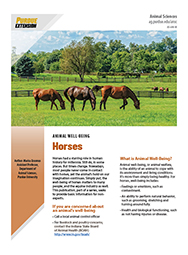 Animal Well-Being: Horses