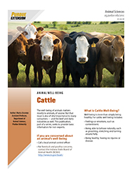 Animal Well-Being: Cattle