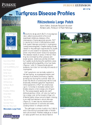 Turfgrass Disease Profiles: Rhizoctonia Large Patch