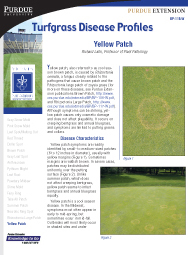 Turfgrass Disease Profiles: Yellow Patch