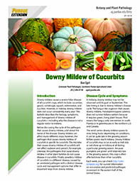 Vegetable Diseases: Downy Mildew of Cucurbits