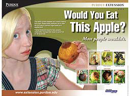 Would You Eat This Apple? poster