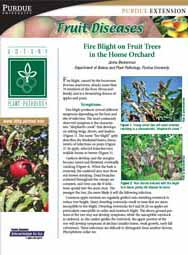 Fruit Diseases: Fire Blight on Fruit Trees in the Home Orchard