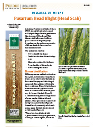 Diseases of Wheat: Fusarium Head Blight (Head Scab)