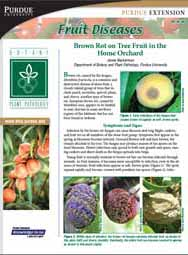 Fruit Diseases: Brown Rot on Tree Fruit in the Home Orchard