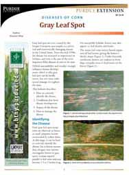 Diseases of Corn: Gray Leaf Spot