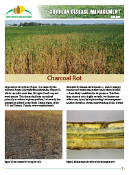 Soybean Disease Management: Charcoal Rot