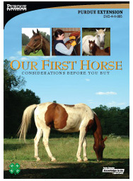 Our First Horse:  Considerations Before You Buy