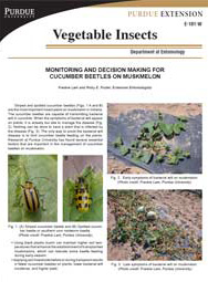 Monitoring and Decision Making for Cucumber Beetles on Muskmelon