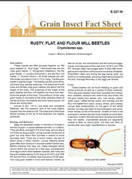 Rusty, Flat, and Flour Mill Beetles