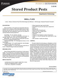 Small Flies