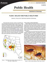 Fleas: Biology and Public Health Risk