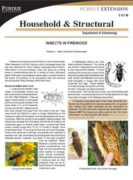 Insects in Firewood