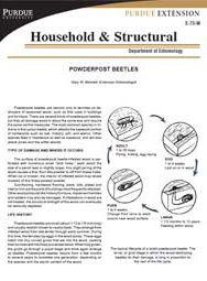Powderpost Beetles