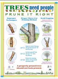 Trees Need People: Prune It Right (English)