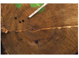 Factors Affecting the Quality of Hardwood Timber and Logs for Face Veneer