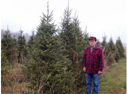 A Choose-and-Cut Pine and Fir Christmas Tree Case Study
