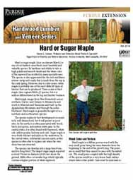 Hard or Sugar Maple