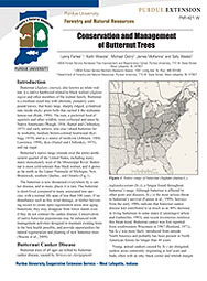 Conservation and Management of Butternut Trees