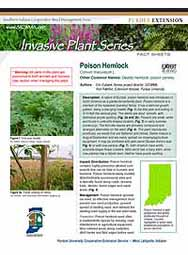 Invasive Plant Species Fact Sheets: Poison Hemlock