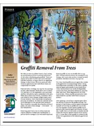Graffiti Removal From Trees