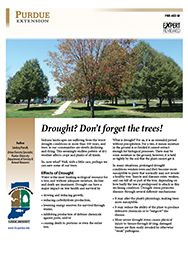 Drought? Don't forget the trees!