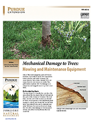 Mechanical Damage to Trees: Mowing and Maintenance Equipment