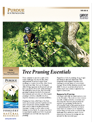 Tree Pruning Essentials