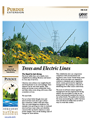Trees and Electric Lines