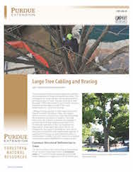 Large Tree Cabling and Bracing