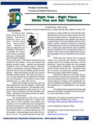 White Pine and Salt Tolerance
