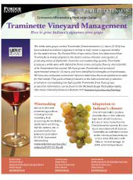 Commercial Winemaking Production Series: Traminette Vineyard Management