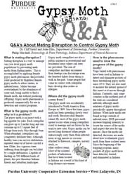 Q&A's About Pheromones & Controlling Gypsy Moth