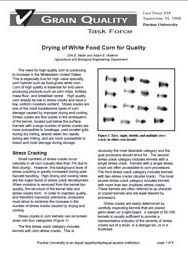 Drying of White Food Corn for Quality