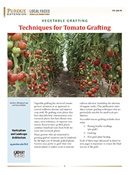 Vegetable Grafting: Techniques for Tomato Grafting