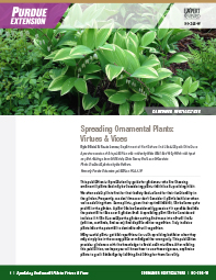 Consumer Horticulture: Spreading Ornamental Plants: Virtues & Vices