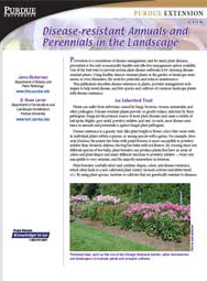 Disease Resistant Annuals and Perennials in the Landscape