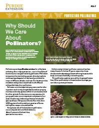 Protecting Pollinators: Why Should We Care About Pollinators?