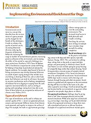 Implementing Environmental Enrichment for Dogs